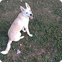 Adopt A Pet :: Lizzy - Bristol, VA
