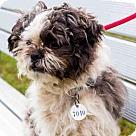 Adopt A Pet :: *PRESTO