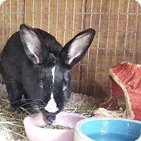Adopt A Pet :: Tipper - Williston, FL