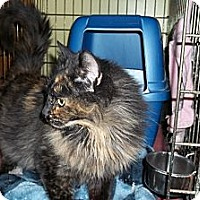 Adopt A Pet :: Emmie - Acme, PA