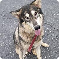 Adopt A Pet :: Shiloh - Augusta County, VA