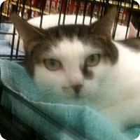 Adopt A Pet :: Steffoni - Cocoa, FL