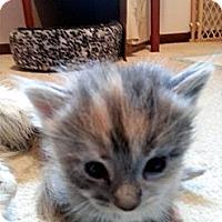 Adopt A Pet :: Rizzo - Xenia, OH