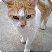 Adopt A Pet :: Mama Amore - El Cajon, CA