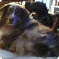 Adopt A Pet :: CLANCY - Portland, OR