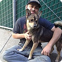 Adopt A Pet :: Wiley Coyote - Santa Barbara, CA