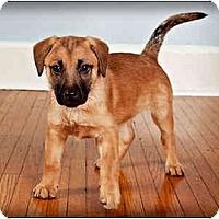 Adopt A Pet :: Pow - Owensboro, KY