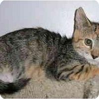 Adopt A Pet :: Clara - Odenton, MD