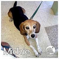 Adopt A Pet :: Mickie - Novi, MI