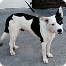 Adopt A Pet :: CARSON