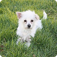 Adopt A Pet :: Earl - California City, CA