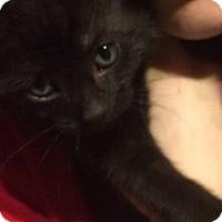 Adopt A Pet :: Apollo - Putnam, CT