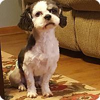 Adopt A Pet :: Bryant - Plainfield, IL