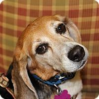 Adopt A Pet :: Steve - Dumfries, VA