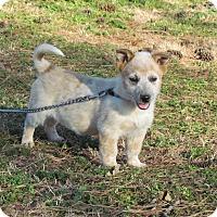 Adopt A Pet :: COLTON - Hartford, CT