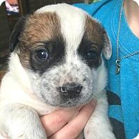 Adopt A Pet :: Olaf - Wharton, TX