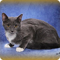 Adopt A Pet :: Alfie & Ralphie - Seminole, FL