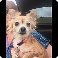 Adopt A Pet :: TeTe - LEXINGTON, KY