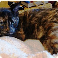 Adopt A Pet :: Flora - Orange, CA
