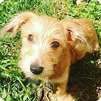 Adopt A Pet :: Charo - Jersey City, NJ