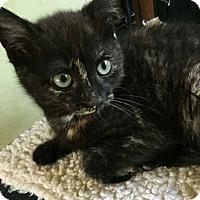 Adopt A Pet :: Aretha - N. Billerica, MA