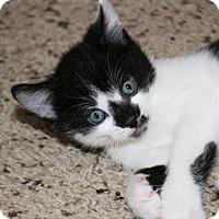 Adopt A Pet :: Sherman - Mesa, AZ