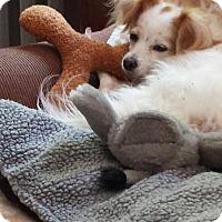 Adopt A Pet :: Dharma - Toronto, ON