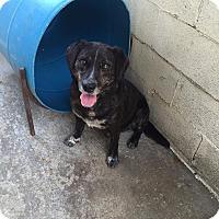 Adopt A Pet :: Maxwell - Bishopville, SC