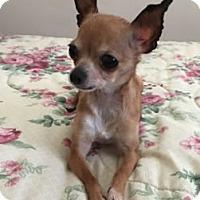 Adopt A Pet :: Janet - Avon, NY