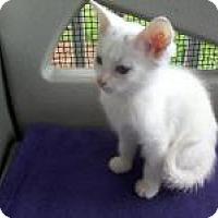 Adopt A Pet :: Parfait - Kinston, NC