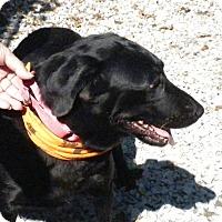 Adopt A Pet :: Missy - Irwin, PA