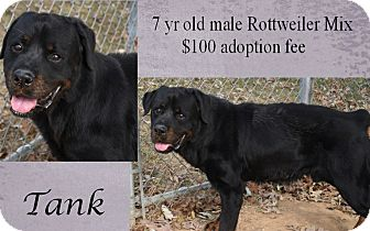 Rottweiler Mix Dog for adoption in Jefferson City, Tennessee - Tank