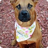 Adopt A Pet :: Henryetta - Norman, OK