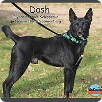 Adopt A Pet :: Dash - South Bend, IN
