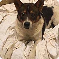 Adopt A Pet :: FOUND DOG 'Coy' - Lenore, WV