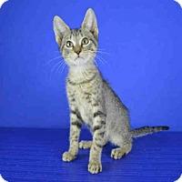 Adopt A Pet :: A027743 - Norman, OK