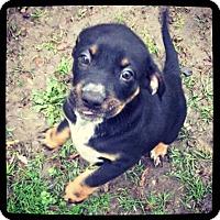 Adopt A Pet :: Jagar - Grand Bay, AL