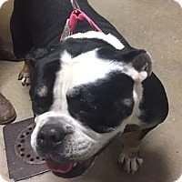 Adopt A Pet :: Susie - Middletown, NY