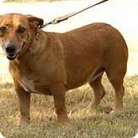 Adopt A Pet :: Sylva - Norman, OK