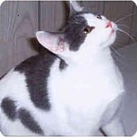 Adopt A Pet :: Jerry - Syracuse, NY