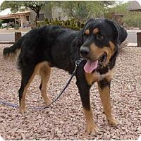 Adopt A Pet :: Riley - Only $85 adoption fee! - Litchfield Park, AZ