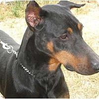 Adopt A Pet :: Rico - Sun Valley, CA