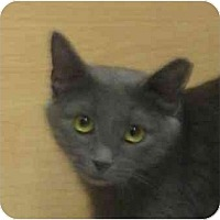 Adopt A Pet :: Kit Kat - Jenkintown, PA
