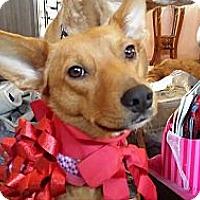 Adopt A Pet :: Lexi - Plainfield, IL