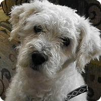 Adopt A Pet :: WINTER - Higley, AZ