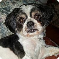 Adopt A Pet :: SNOOPY - Eden Prairie, MN