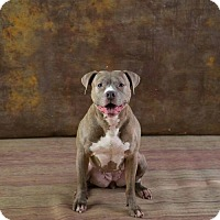 Adopt A Pet :: Piper - Brooklyn Center, MN