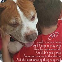 Adopt A Pet :: Wilbur - Holmes Beach, FL