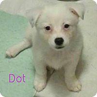 Adopt A Pet :: Dot - House Springs, MO