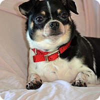 Adopt A Pet :: Patches - Albemarle, NC